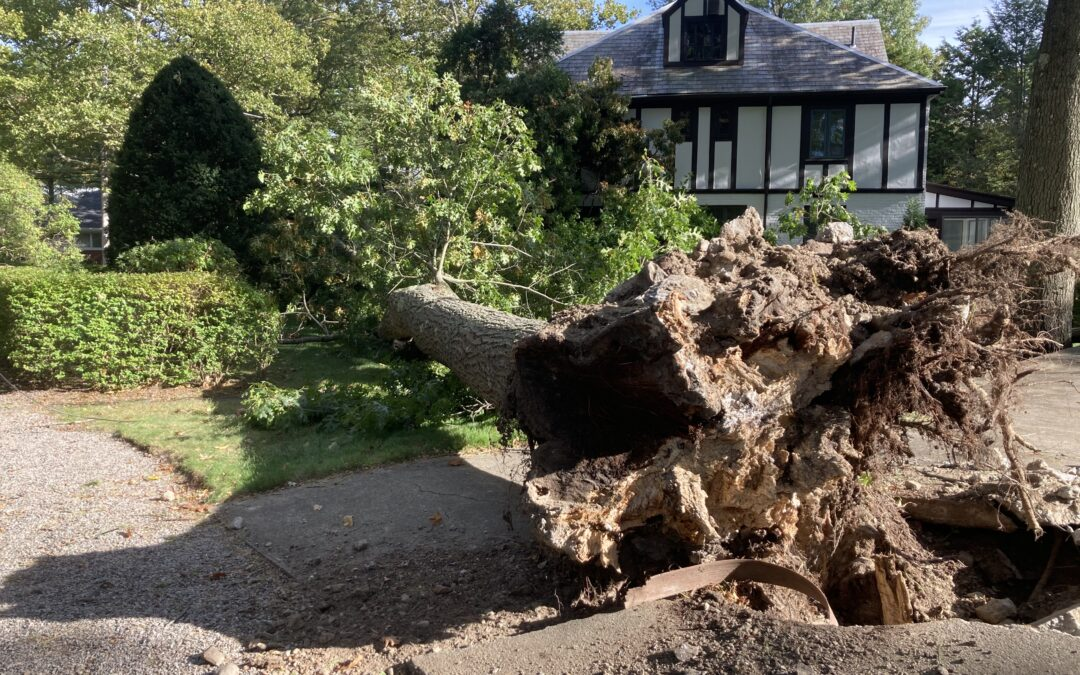 A Tree Falls in Brookline (Alarming and Shocking Story That You Didn't See In the Headlines)
