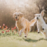 Walking Through The Loss of Your Pet With Grace